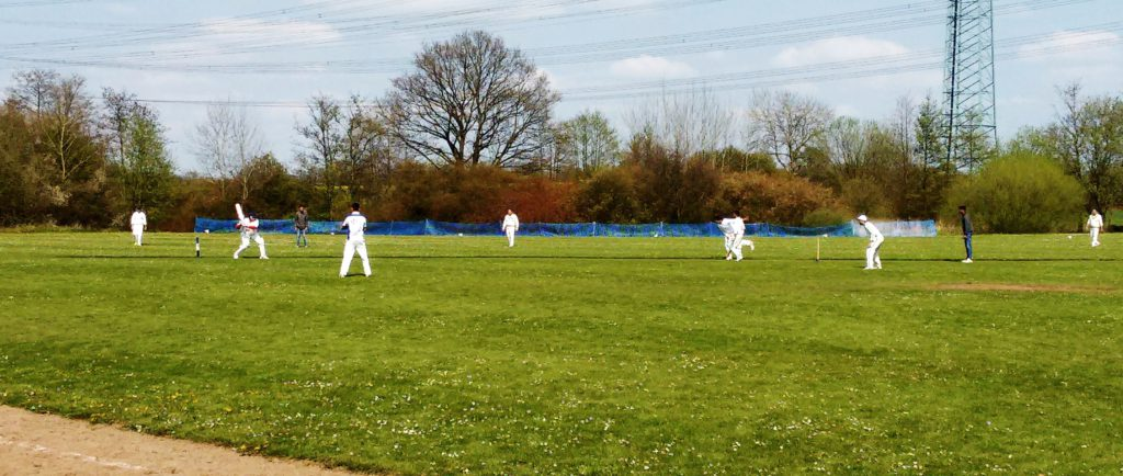 Cricket beim THCC